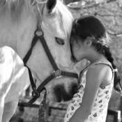 bwf_equine_4