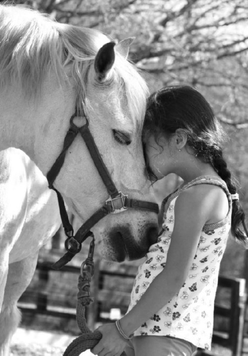 a passion for horses since childhood Horse quotes from brainyquote, an extensive collection of quotations by  if you  put in love and respect and kindness and curiosity, the horse will return that   over bamboo poles in the garden took up pretty much my entire childhood.